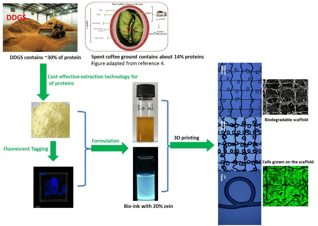 Reclaiming plant proteins as ingredients for 3D bioink to print 3D scaffolds.