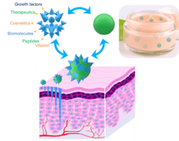 Microneedle granules with demonstration of depth-controlled microchannels through skin and formulation with cosmetic cream, functionalization with growth factors, therapeutics or cosmetics (e.g., biomolecules, peptides, proteins, vaccine, vitamin, etc.)